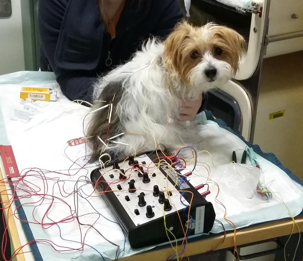 Akupunktura-živali-pes-2