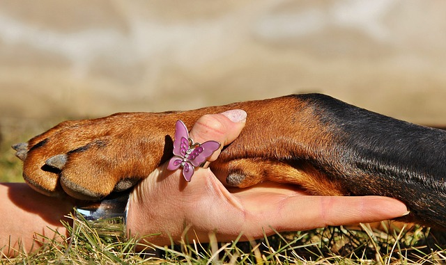 Masaža živali
