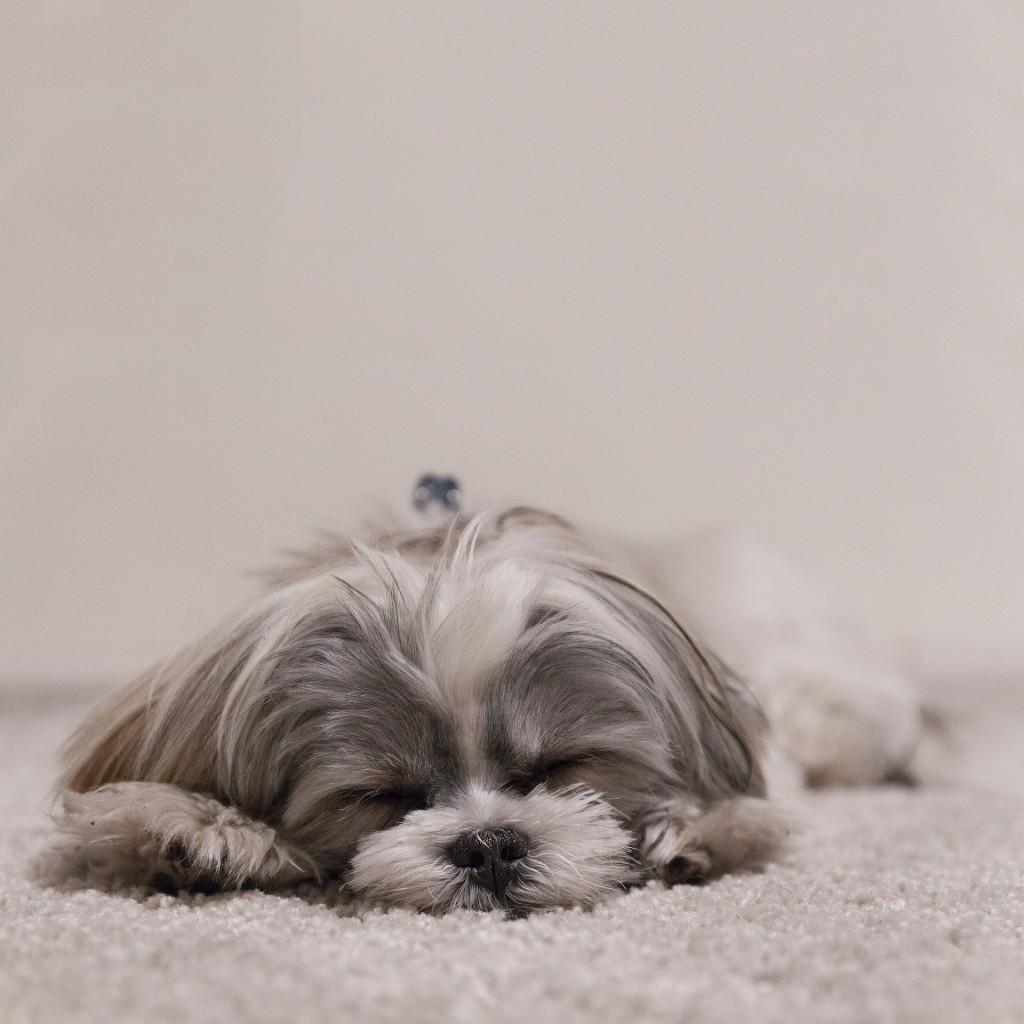 Pes-akupunktura-sproščen