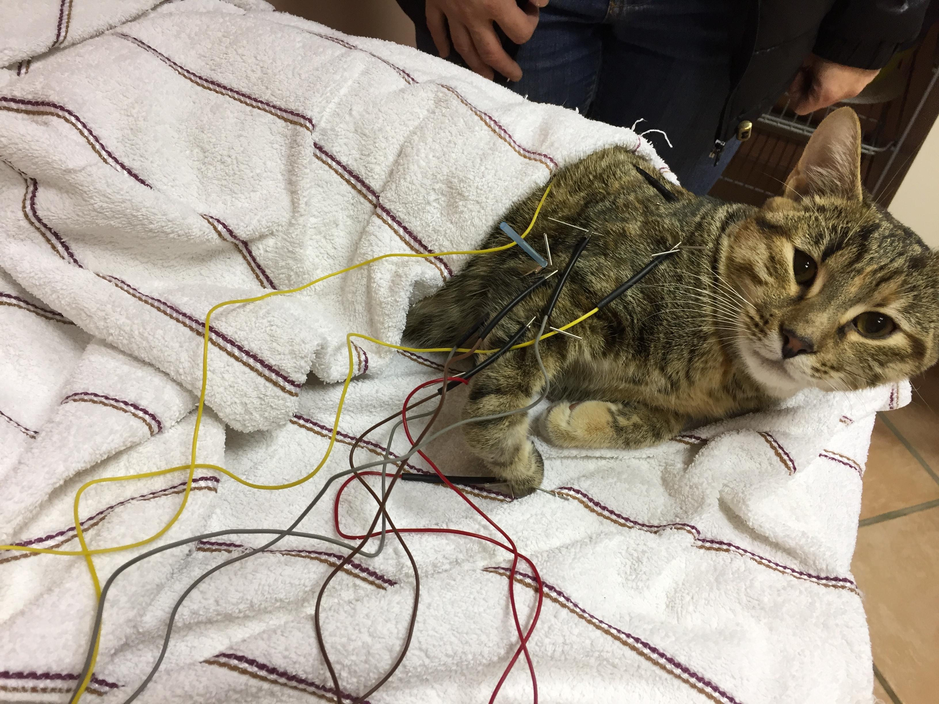 paraliza tačke muca akupunktura